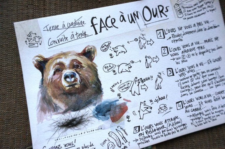 conduite a tenir face a un ours
